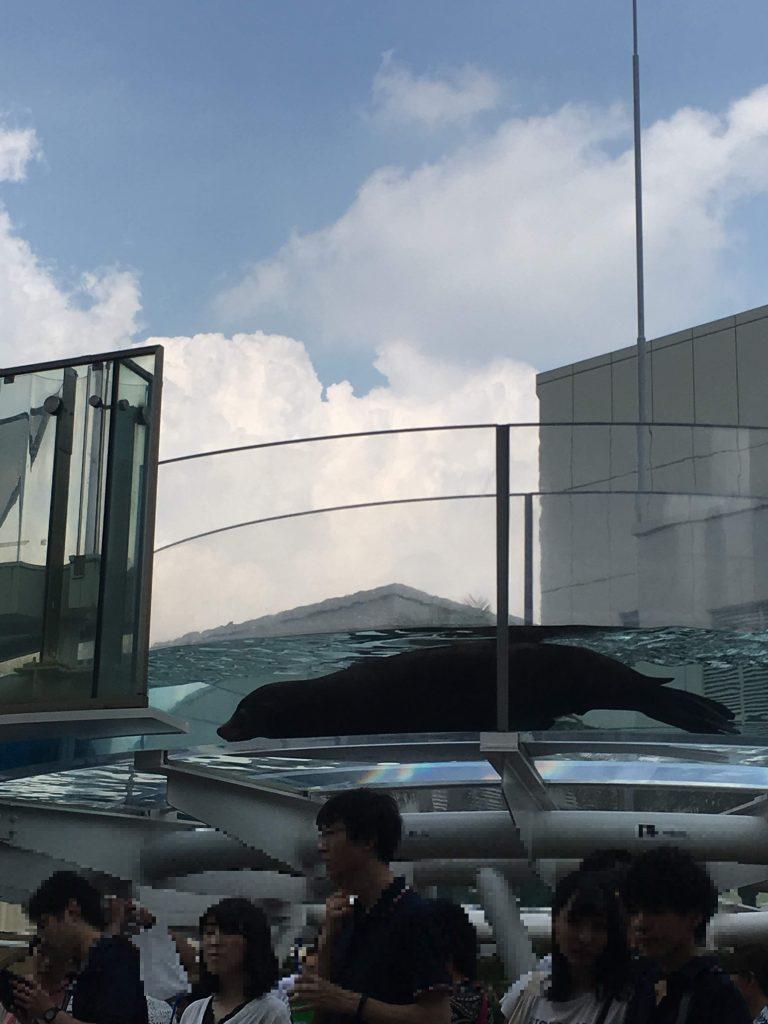 東京、サンシャイン水族館の屋上にあるアクアリングと呼ばれるドーナツ型の水槽