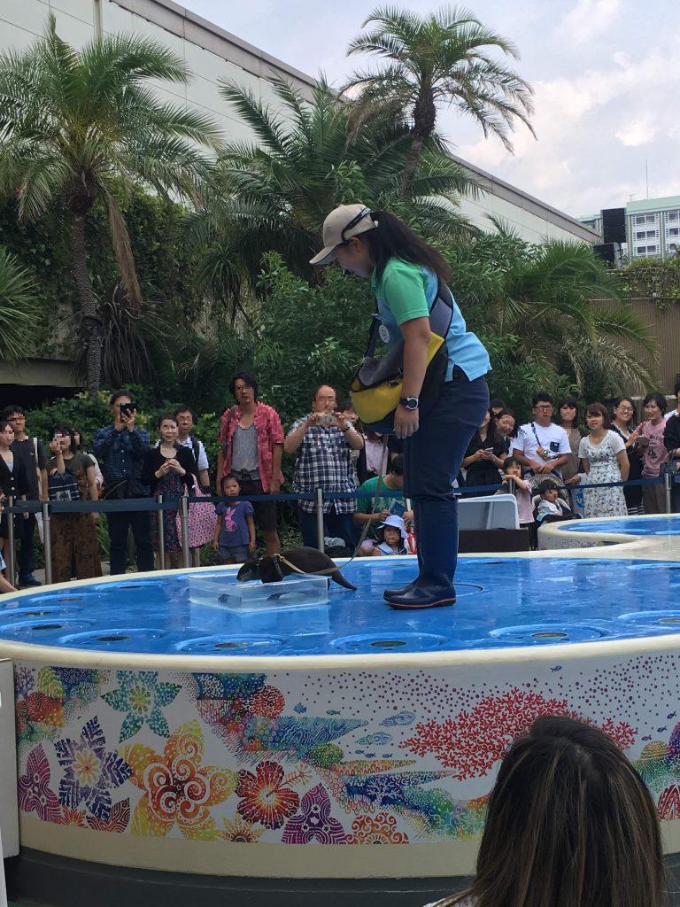 東京、サンシャイン水族館のカワウソのショー
