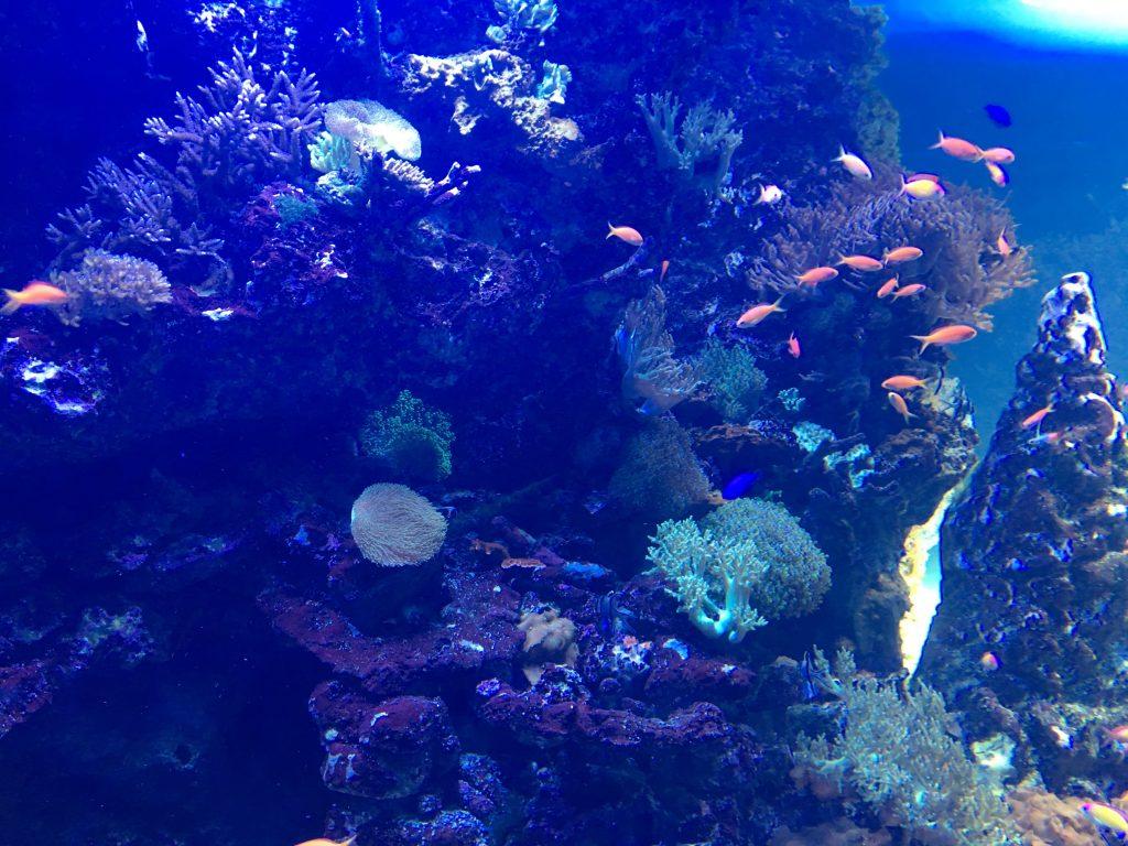 東京、サンシャイン水族館の水槽