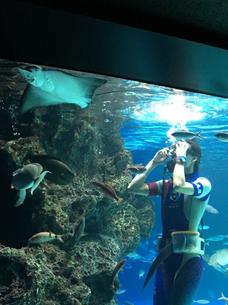 東京、サンシャイン水族館のダイバーによる餌やり