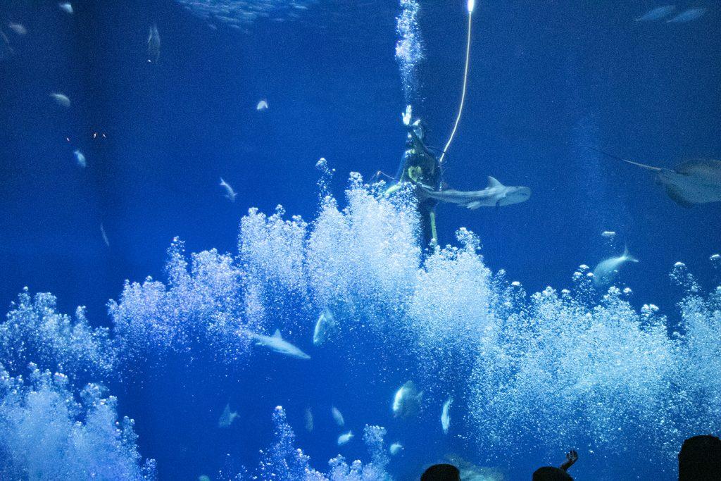 茨城県、アクアワールド・大洗水族館でショーをするダイバー