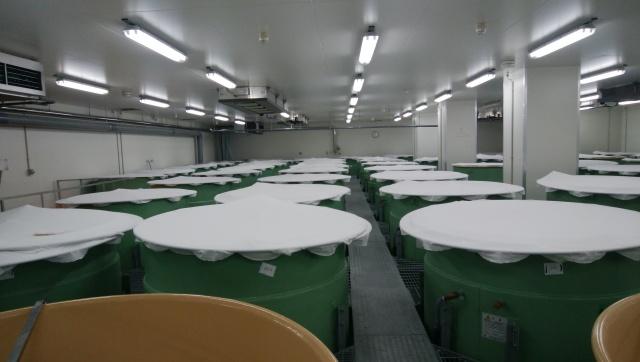 山口県、旭酒造株式会社の酵母づくりの冷蔵室