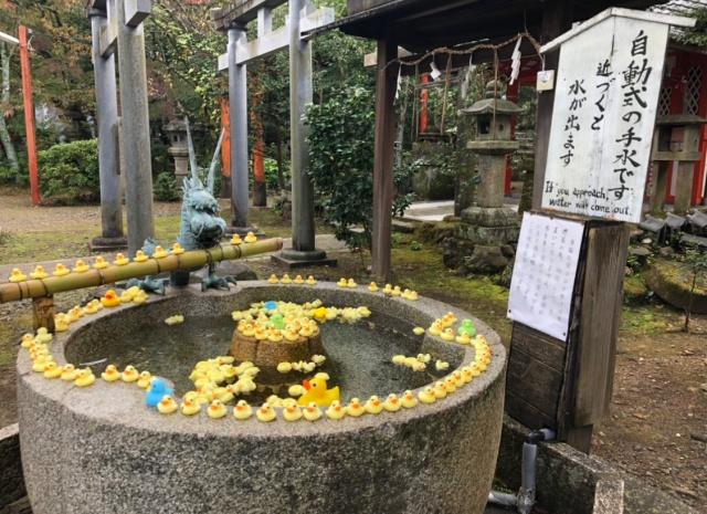 京都府、粟田神社のアヒル