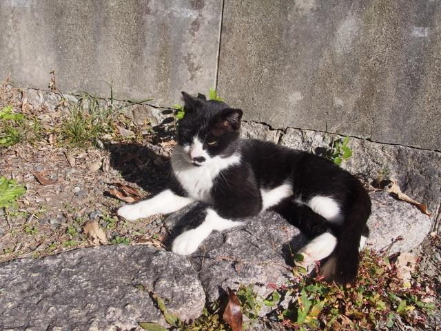 京都府、一般財団法人国民公園協会京都御苑の猫